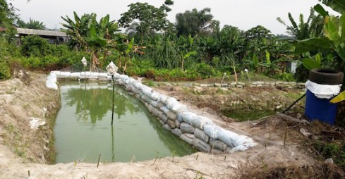 fish-ponds-on-the-farm
